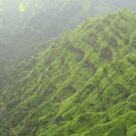 mahabaleshwar greenery